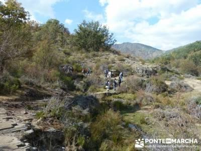 Paseo por el Hayedo de Tejera Negra - Senderismo Cantalojas, Guadalajara; senderos de alicante